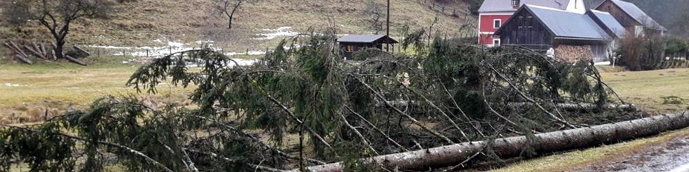 Umgestürzte Bäume auf der L125